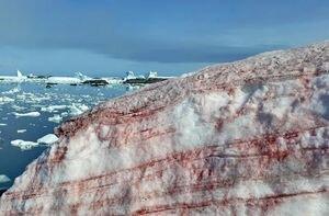 В Антарктиде снег окрасился в кровавый цвет: зрелищные фото