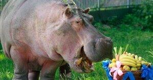 Зачем в Украине утилизируют просроченные продукты, вместо того чтоб отдавать их животным в зоопарки
