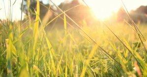 Жара и дожди: синоптики дали прогноз погоды на 12 июня