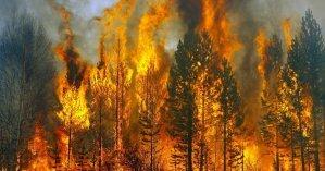 Пожары в Луганской области: четверых людей не могут найти и еще семеро умерли
