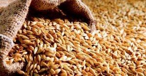 Из Госрезерва разворовали зерна на почти 2,5 млн гривен