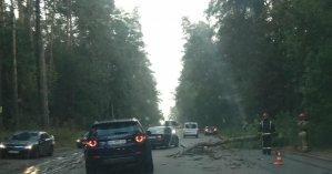 В Киевской области посреди дороги упало дерево и повредило два автомобиля