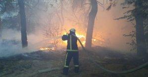 Более 2 тыс. человек продолжают бороться с огнем в Луганской области: в двух районах сложилась опасная ситуация