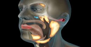 Ученые впервые за сотни лет открыли новый орган в теле человека