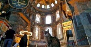 В турецком Стамбуле умерла кошка-знаменитость по кличке Гли
